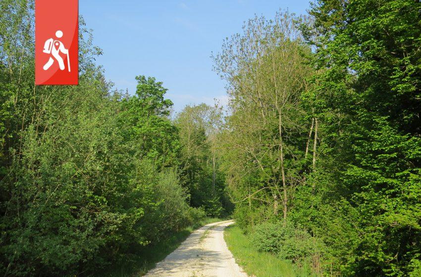 Schnaitheim – Nattheim – vorbei an der Birkelhöhle zu Karstquellen im Wald
