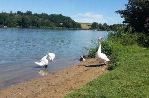 Limes-Park - Rainau - Wandertipp