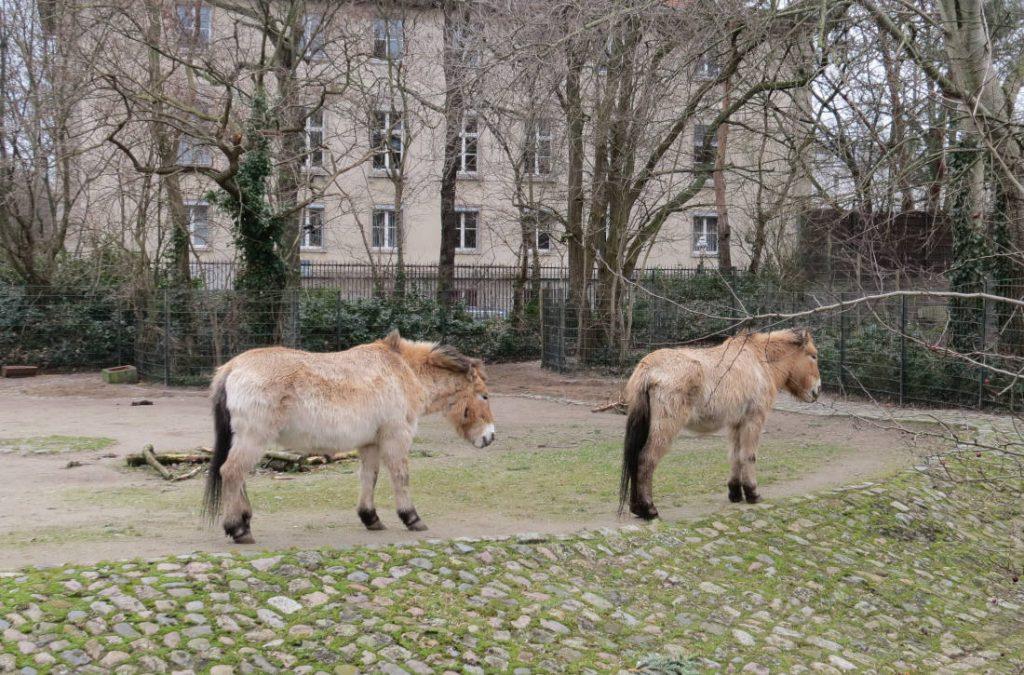 Zoologische Garten Berlin Deutschland