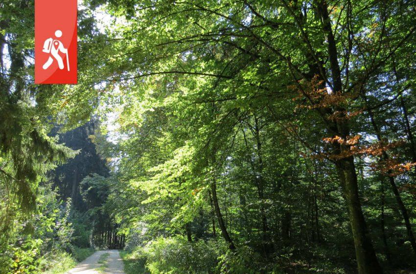 Bolheim – Wanderung durch die Zeit auf dem Urweltpfad