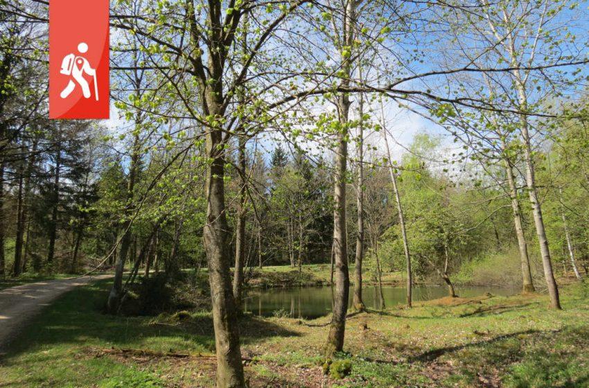 Aufhausen / Bopfingen – Wanderung am Rand des Nördlinger Ries
