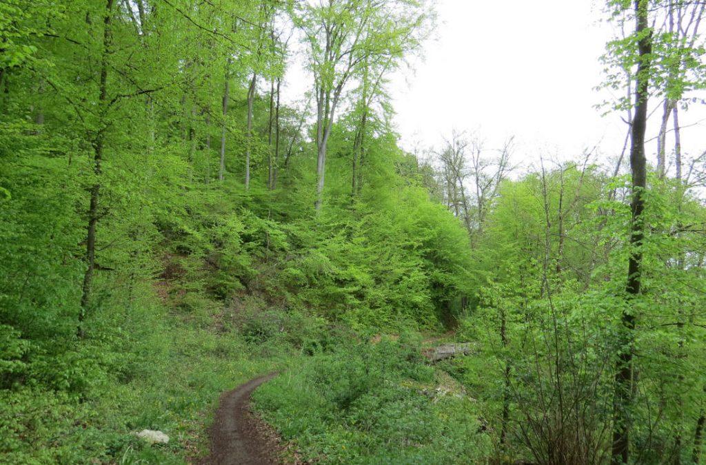 Mergelstetten – Wasserweg – Brenz – Heidenheim – Schwäbische Alb – Deutschland – Wandertipp – viagolla