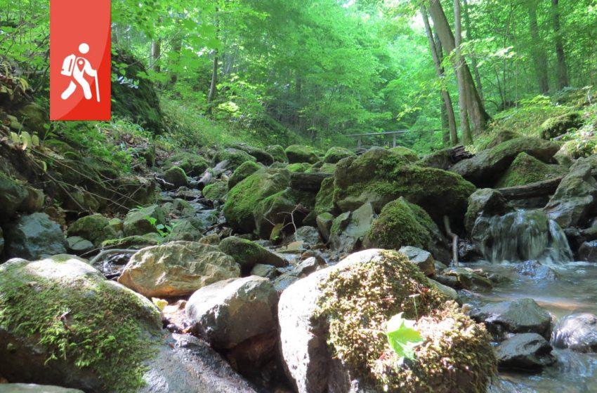 Randecker Maar – deine Wanderung durch den Schwäbischen Vulkan